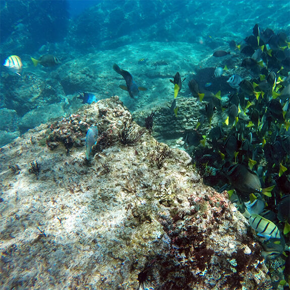 pipilas-tours-isla-isabel-arrecife